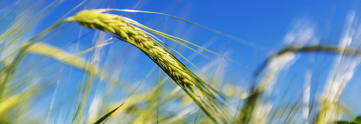 Фитаты  — причина миллиардных потерь российского сельского хозяйства